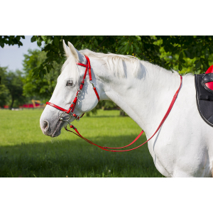 Norton Synthetic bridle/headcollar
