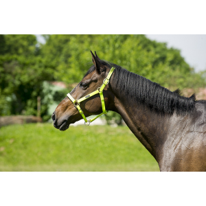 Norton Synthetic halter
