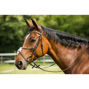 "RIDING WORLD ""Fin"" bridle, figure-8 noseband"