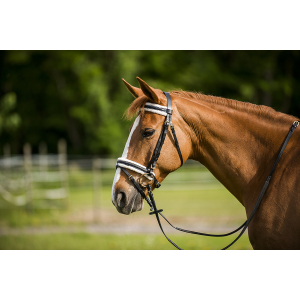 "EXCELSIOR ""Doublé mouton"" bridle, flash noseband"
