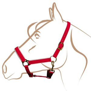 Nylon Christmas headcollar