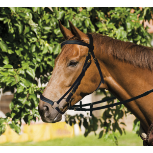 Eric Thomas Bridle with drop noseband