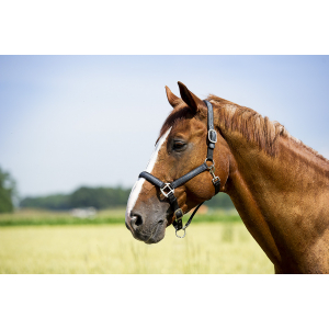 Polar fleece lined nylon jeans headcollar