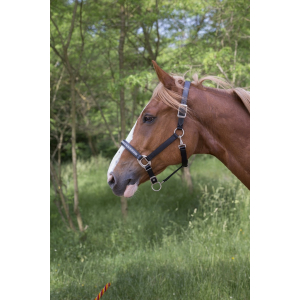 NORTON Fashion Nylon/leather headcollar