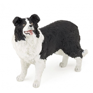 Border collie Papo
