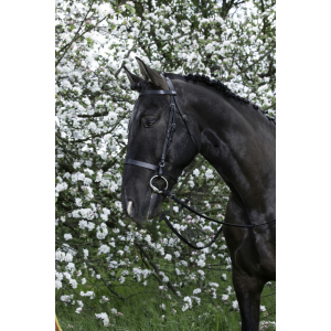 Bridle Riding World french noseband