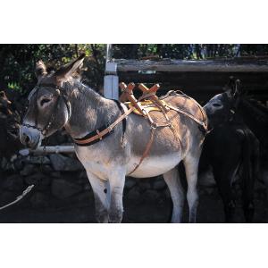 Packsattel aus Holz für Esel