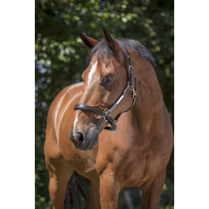 Norton Pro Grooming Leather halter