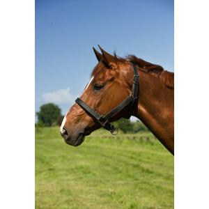 EXCELSIOR Chroomlederen halster voor trekpaard