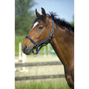 Leather lined nylon headcollar
