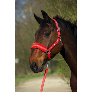 Norton Synthetic fleece lined nylon headcollar + rope set