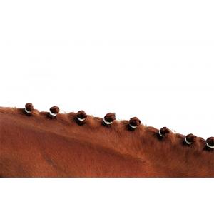 Élastiques à crinière Hippo-Tonic