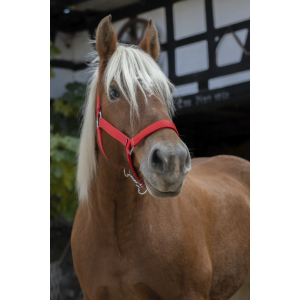 Norton Pro Draught Horse Halter