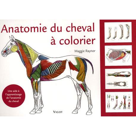 Coloriage Cheval Avec Selle.Anatomie Du Cheval A Colorier Livres Bd Padd